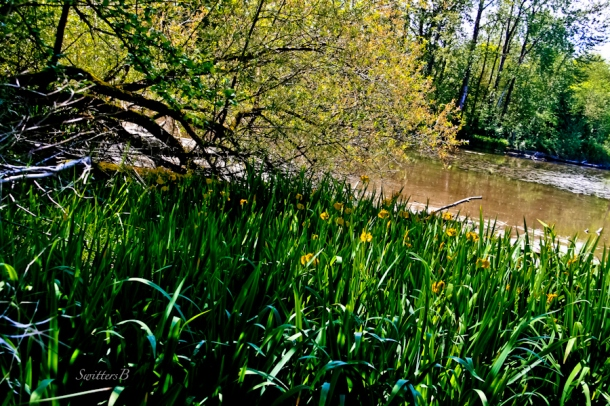 Whitaker Ponds-Portland-habitat-SwittersB