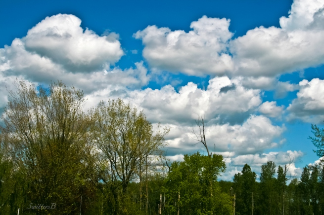 clouds-trees-April-Oregon-skyline-SwittersB