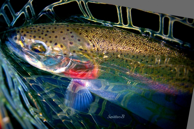 Net-Trout-SwittersB-colors-spectrum