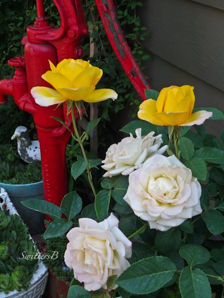 rose-garden-SwittersB