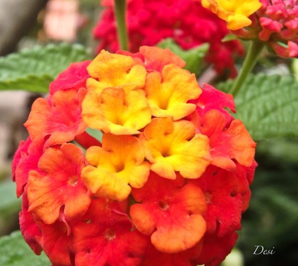 Desi-butterflies-SwittersB-flower