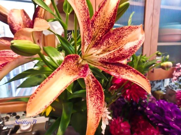 cut flowers-lily-SwittersB