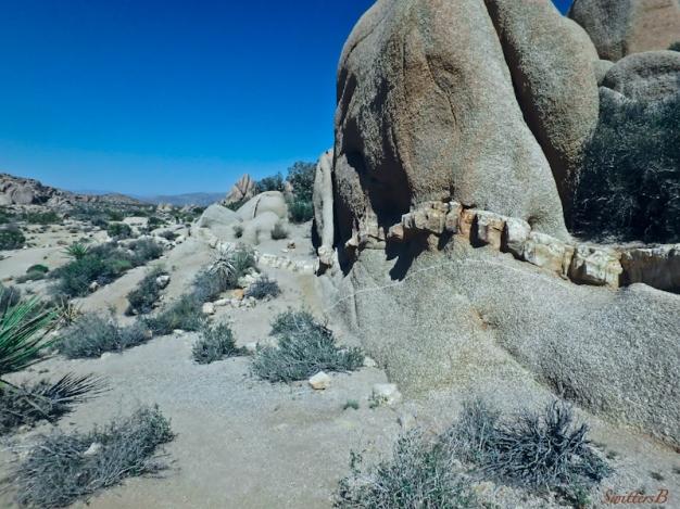 layer exposed-desert-Joshua Tree NP-rock formations-SwittersB