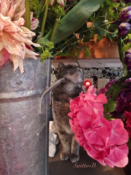 Penny-flowers-SwittersB
