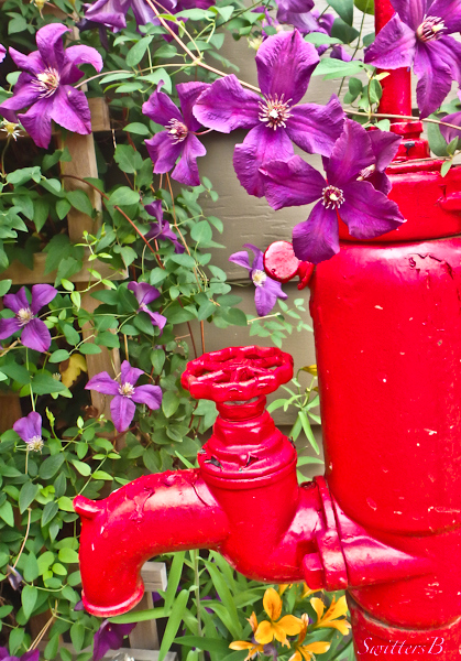 red pump, backyard, clematis, SwittersB