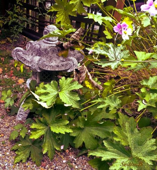anemone-yard art-flowers-asian-garden-2