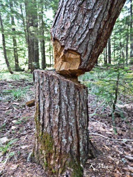 base-tree-cut-Kelly