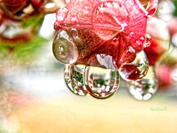 raindrops-garden-SwittersB