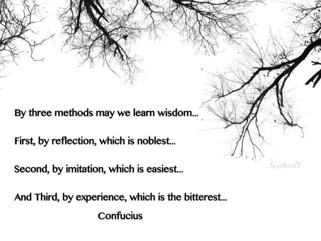 wisdom-photo-SwittersB-branches