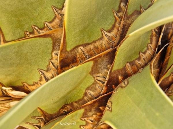 Yucca Design-desert-SwittersB