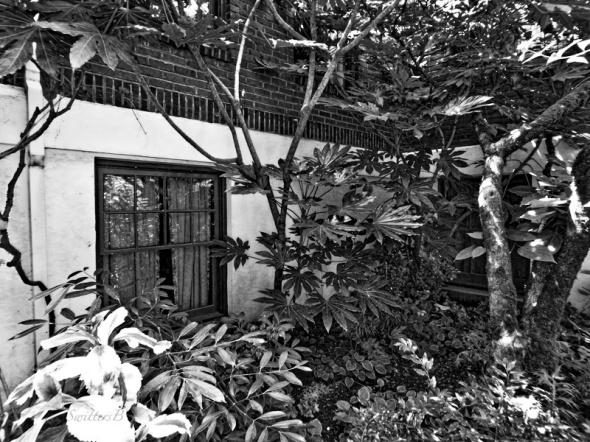 downstairs window-plants-SwittersB
