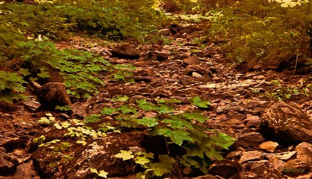 dry creek bed-Mt Hood-Oregon-Kelly Muncy-SwittersB