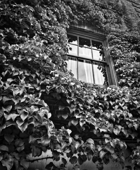 ivy-window-memories-SwittersB