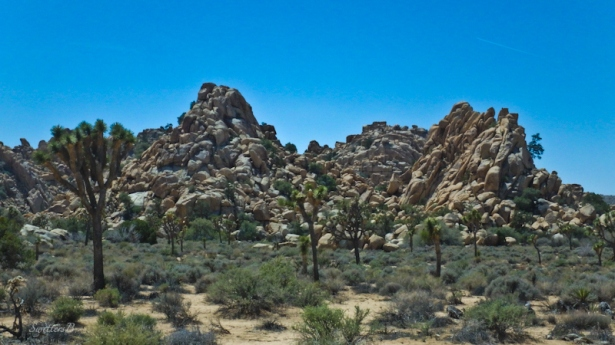 Joshua Tree, desert, rock formation, SwittersB