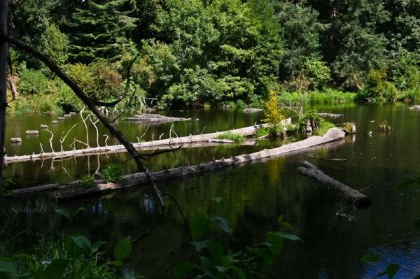 Reed Canyon-lake-pond-Portland-SwittersB