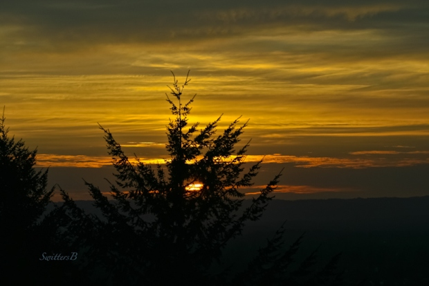 Rocky Butte-tree-sunset-Portland-SwittersB