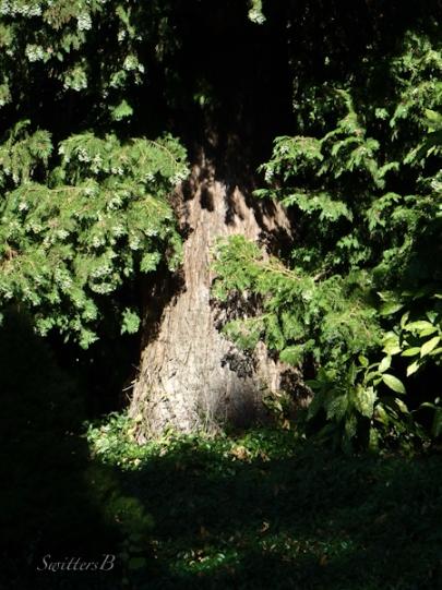 woods, trees, Oregon, SwittersB, sunlight