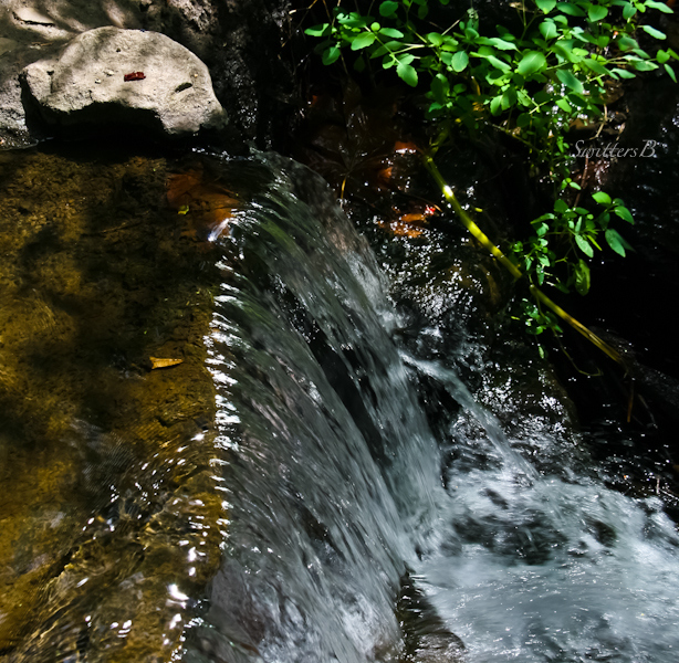 stream-small waterfall-Crystal Spgs-Reed-SwittersB