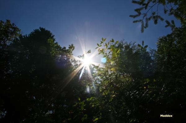 sun in the eye-maddox