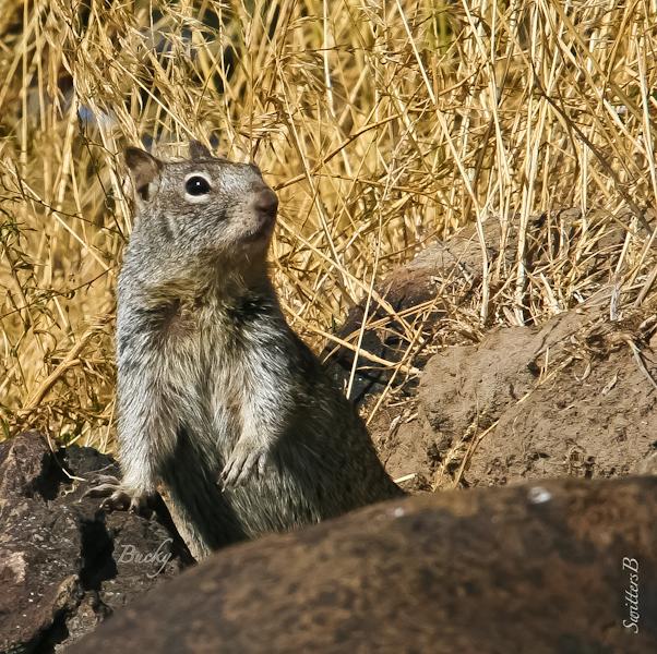 Big Squirrel-Shoreline-SwittersB-Bucky