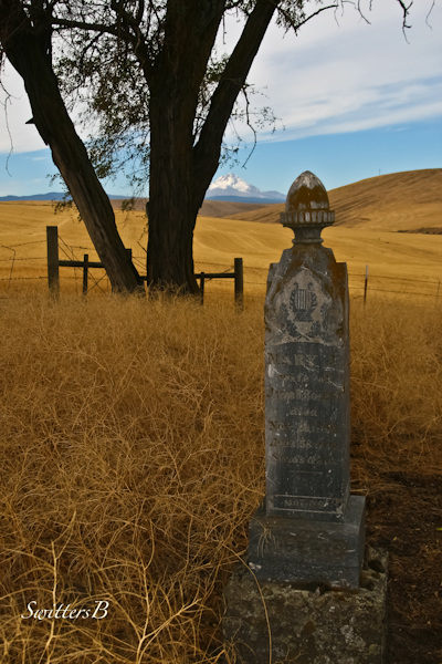 brambles & headstone-SwittersB-cemetery