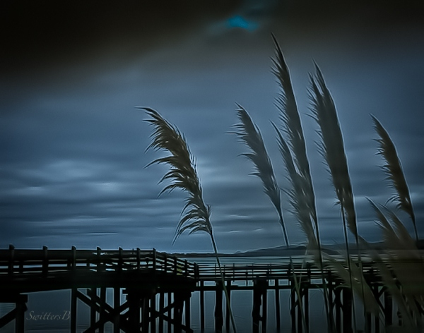 dock-grass-Siletz Bay-SwittersB-Oregon