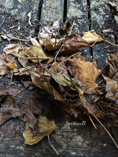 dry leaves and old boards-SwittersB