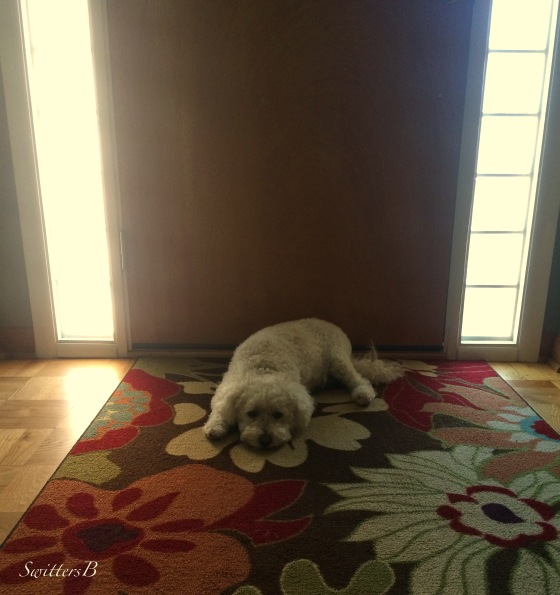 Harley-Dog-Waiting-Door-SwittersB