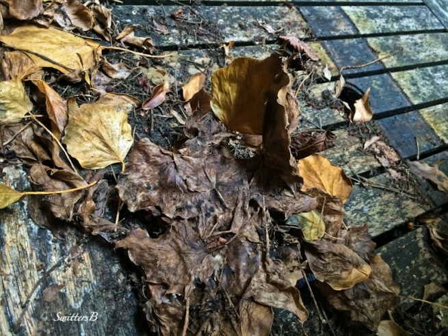 old leaves on boards-SwittersB