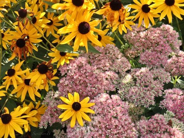 SwittersB flowers