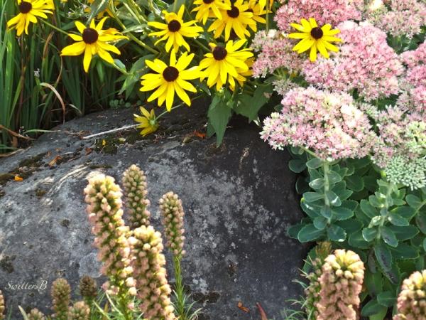 flowers-rock-SwittersB