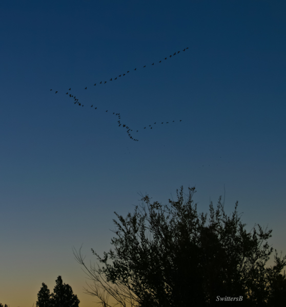 Geese-southbound-dusk-photo-Oregon-SwittersB-2