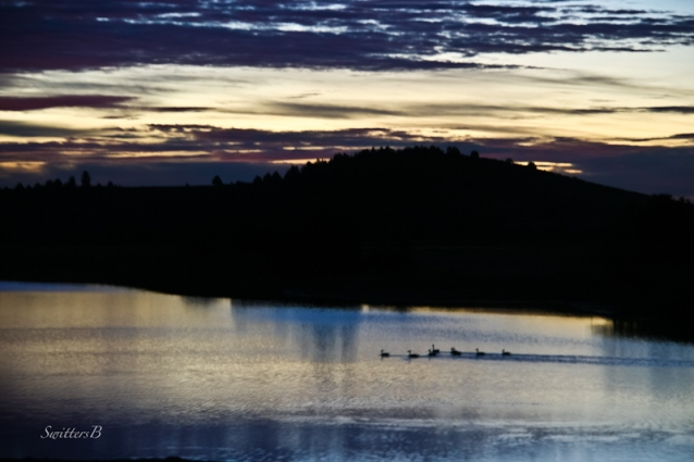 morning--geese-lake-Oergon-SwittersB-2