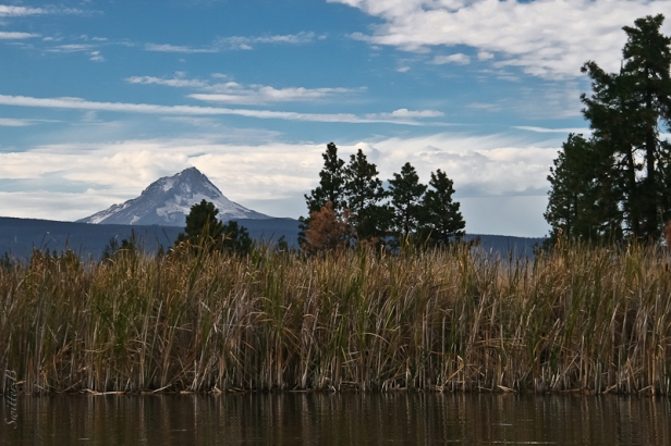 Mt. Hood-reeds-lake-Oregon-SwittersB