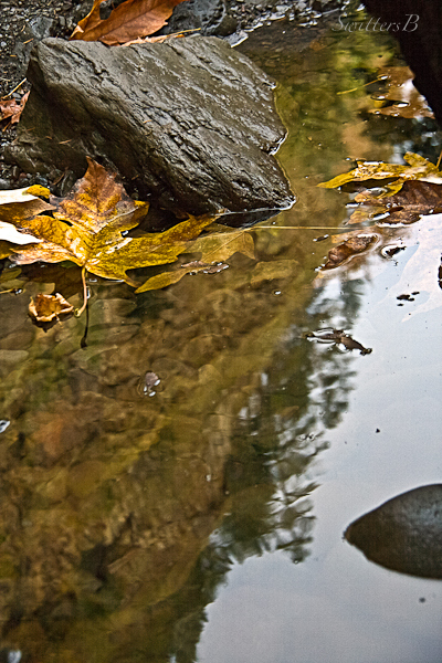 reflection-leaf-water-SwittersB
