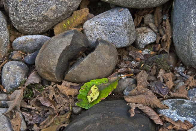 split rock-river bank-leaves-SwittersB