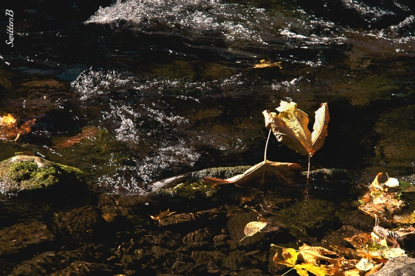 stream-leaves-water-SwittersB