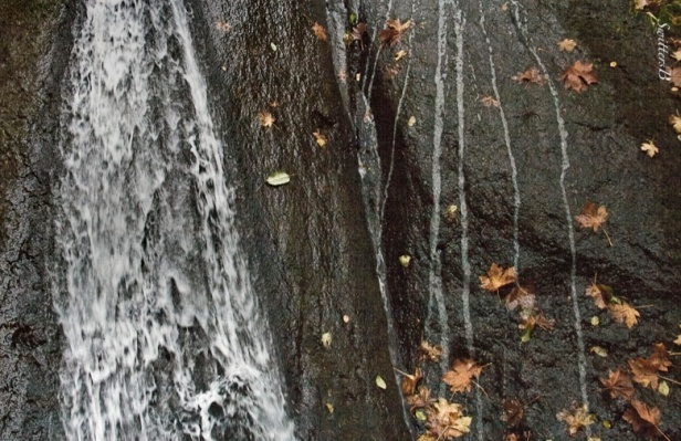 Waterfalls-rock wall-leaves-Wachella-SwittersB