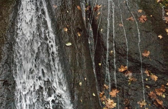 Waterfalls-rock wall-leaves-Wachella-SwittersB