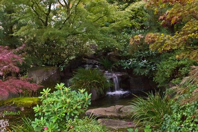 backyard-landscape-water feature-trees-SwittersB-4