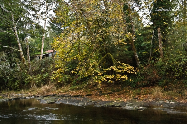 fall-leaves-river bank-shed-SwittersB-2