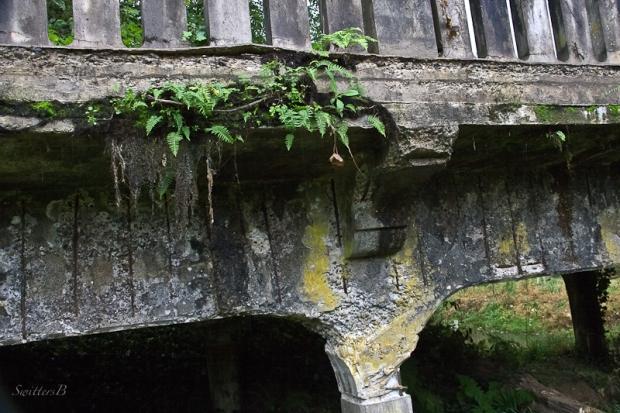 ferns-bridge decay-mccarthy creek-SwittersB