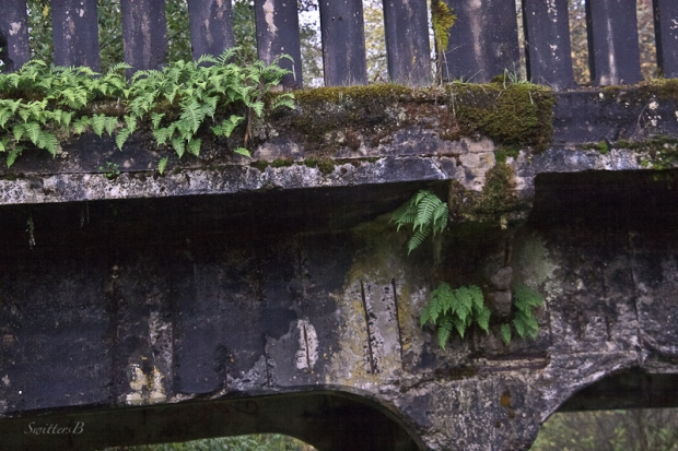 ferns-old bridge-mccarthy creek-SwittersB