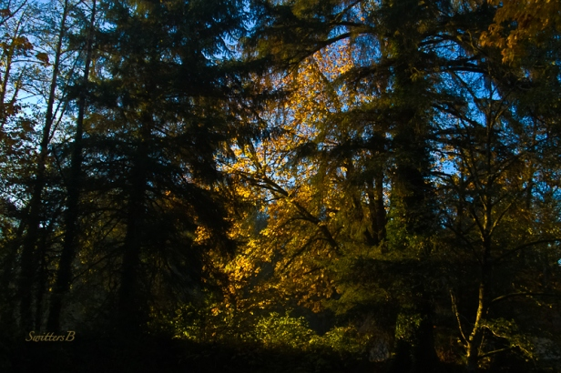 glow-trees-sun-Fall-SwittersB