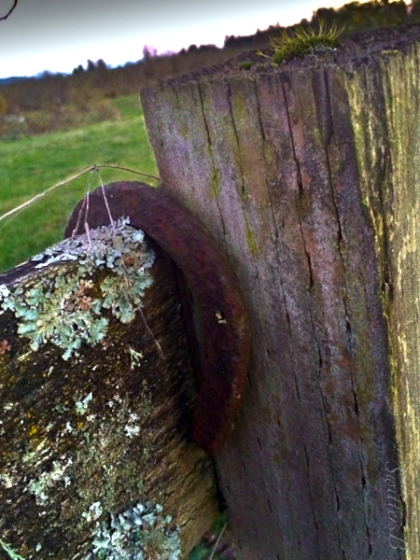 horseshoe-fence-post-lichen-SwittersB