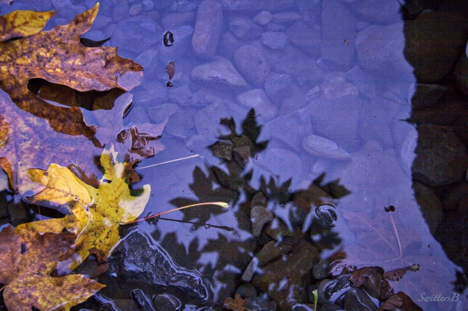 leaves-reflection-water-SwittersB