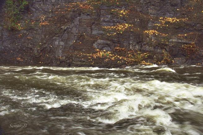 maple leaves-cliff-Salmon River-SwittersB