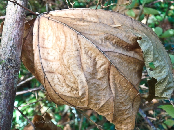 Fall-decay-leaf-age-SwittersB