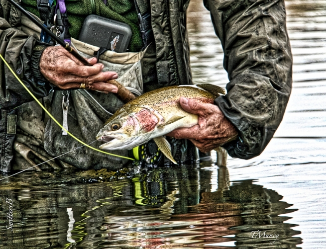 trout-TM-rainbow-midge-fly fishing-Oregon-SwittersB_HDR-2