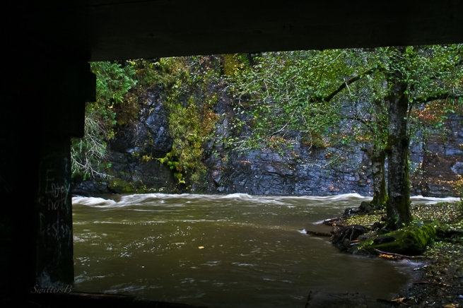 under bridge-Salmon R-trees-SwittersB